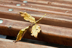 Yellow leaf on a bench Stock Photos