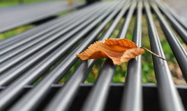 Yellow leaf on the bench. Yellow leaf on a bench in an autumn park Stock Photography