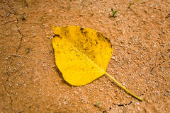 Yellow leaf with black specks lies on dry ground. Drought. Yellow leaf with black specks lies on dry ground Royalty Free Stock Photography