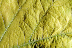 Yellow leaf blade closeup Stock Images