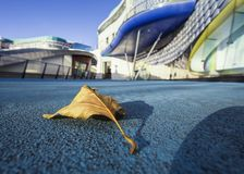 Yellow Leaf on Blue Concrete with Blurry Modern Buildings Backg royalty free stock images