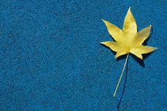 Yellow leaf on blue ground Stock Photography
