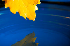 Yellow leaf on blue water Royalty Free Stock Photography