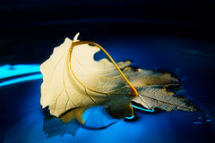 Yellow leaf on blue water Stock Images