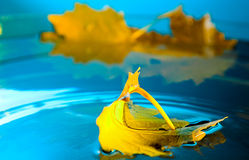 Yellow leaf on blue water Stock Photography