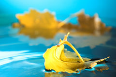 Yellow leaf on blue water Stock Photo