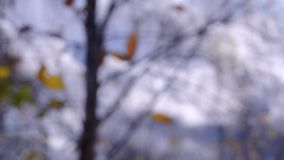 Yellow leaf on branch on background of blue sky dark clouds close-up. stock video footage