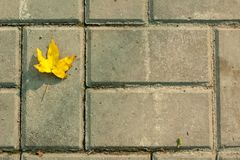 Yellow leaf on the brick road. One Yellow leaf on the grey brick road royalty free stock photography