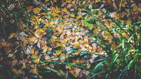 Yellow Leaf in Brown Soil Near Green Grasses Royalty Free Stock Images