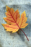 Yellow Leaf on Burlap Stock Photos