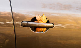 Yellow leaf in car door Stock Image