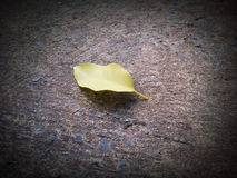 Yellow Leaf On the cement floor Stock Images