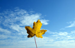 Yellow leaf with cloudy blue sky. A yellow leaf on a warm, sunny authumn day Stock Photography