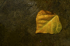 Yellow Leaf on the Concrete. Alone yellow leaf on the wet concrete after raining Stock Images