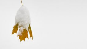 Yellow Leaf Covered with Snow. Christmas Background Stock Images
