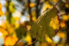 Yellow leaf on the twig in autumn forest Stock Photos
