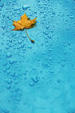 Yellow leaf and drops on the blue. Waterproof material Royalty Free Stock Photo