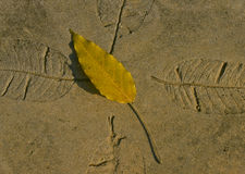 Yellow leaf and embossed leaves Stock Images