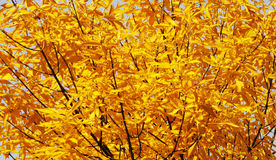 Yellow Leaf of fall Stock Image