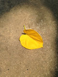 Yellow leaf fall on the pavement. Stock Images