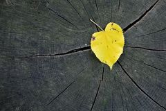 Yellow leaf. Fall leaf on wood log in the forest Stock Images