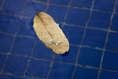 Yellow leaf floating on surface of water Stock Photos