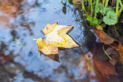 Yellow leaf floating on water. Autumn leaf floating on water Royalty Free Stock Photos