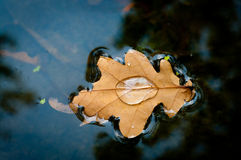 Yellow leaf floats in the river Royalty Free Stock Photography