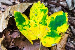 Yellow leaf in the forest. royalty free stock images