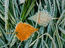 Yellow leaf and frozen Royalty Free Stock Photos