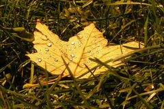 Yellow leaf on the grass background Royalty Free Stock Photos
