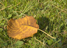 Yellow leaf on grass background Royalty Free Stock Images