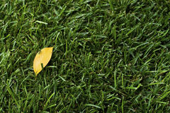 Yellow leaf on the green grass Royalty Free Stock Photos