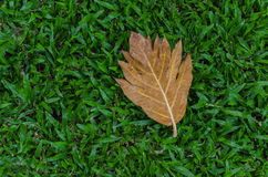 Yellow leaf on green grass. Floor Stock Images