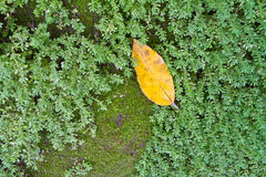 Yellow leaf and green moss Stock Photography