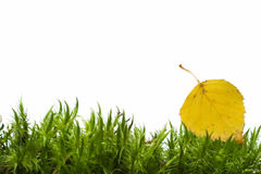 Yellow leaf on green moss Royalty Free Stock Photo
