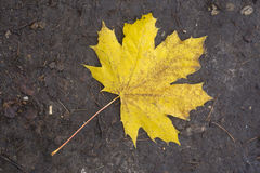 Yellow leaf on the ground Royalty Free Stock Photo