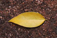 yellow leaf on ground for pattern Royalty Free Stock Photos