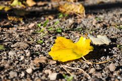 A yellow leaf is on the ground stock photography