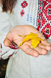 Yellow leaf. In the hand of a young girl Stock Photos
