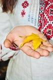 Yellow leaf Stock Photos