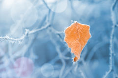 Yellow leaf with hoarfrost Stock Photography