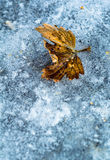 Yellow Leaf on Ice Stock Image