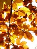 Yellow Leaf Illustration Stock Photo