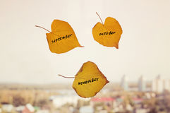 yellow leaf with the inscription SEPTEMBER, OCTOBER, NOVEMBER Stock Photo