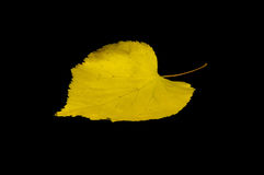 It is Yellow leaf isolated Royalty Free Stock Image
