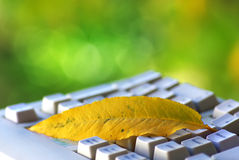 Yellow leaf on keyboard. Royalty Free Stock Images