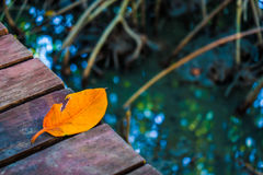 Yellow Leaf. The leaves fell from the trees still beautiful Royalty Free Stock Images