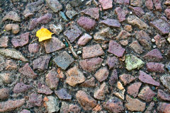 Yellow leaf lies on paved road Royalty Free Stock Images