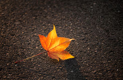 Yellow Leaf Lies on the Pavement. In the Light of the Setting Sun Royalty Free Stock Photos